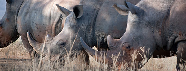Saving rhinos with connected zebras | The IoT Download October 2017