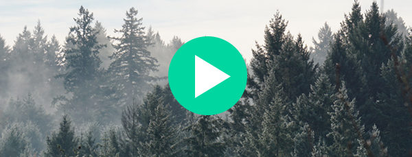 The world's first 5G connected forest | IoT Insider Podcast Episode 14